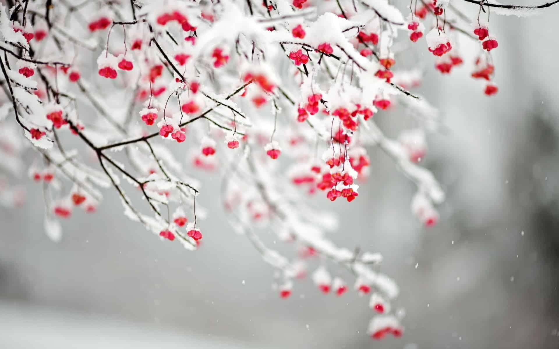 božično drevesce wd40