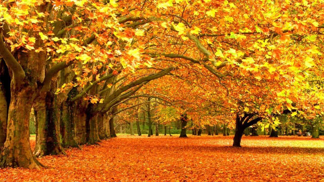 jesen wd40